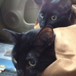 Nancy S., Maryland Heights MO Cleo & Zoie